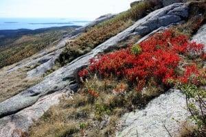 Acadia National Park (23)