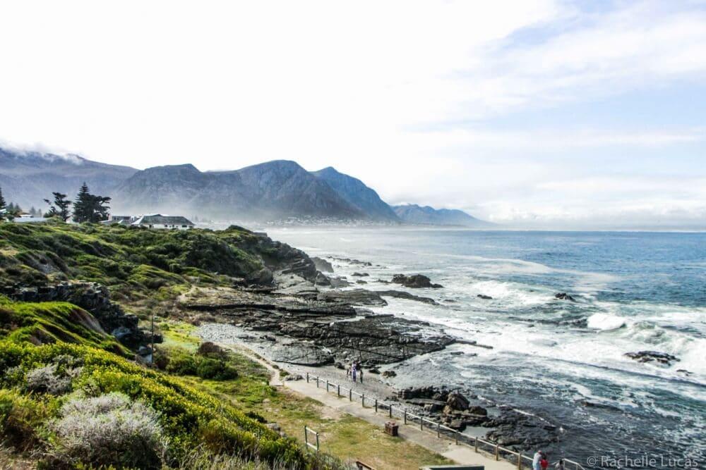 SouthAfricaFynbosSafari_RachelleLucas-16