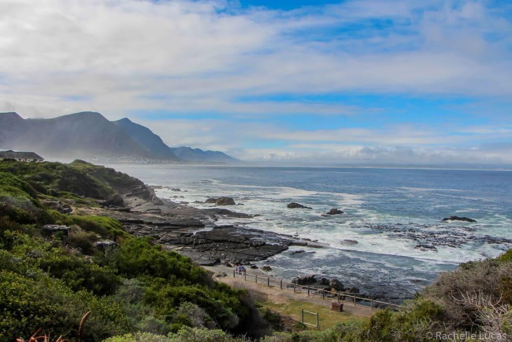SouthAfricaFynbosSafari_RachelleLucas-19