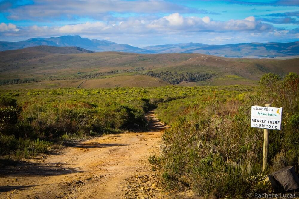 SouthAfricaFynbosSafari_RachelleLucas-41