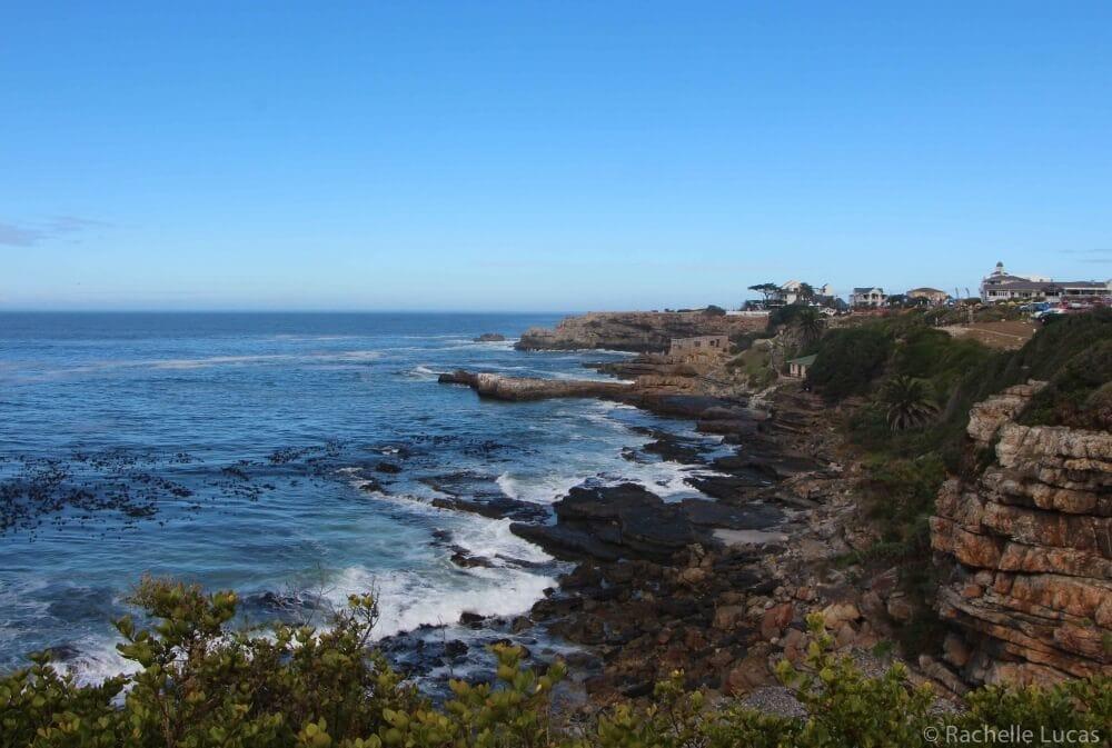 SouthAfricaFynbosSafari_RachelleLucas-9