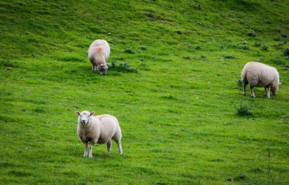 RachelleLucas_TheTravelBite_Wales-92