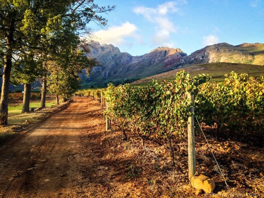 Stellenbosch_TheTravelBite_RachelleLucas-13
