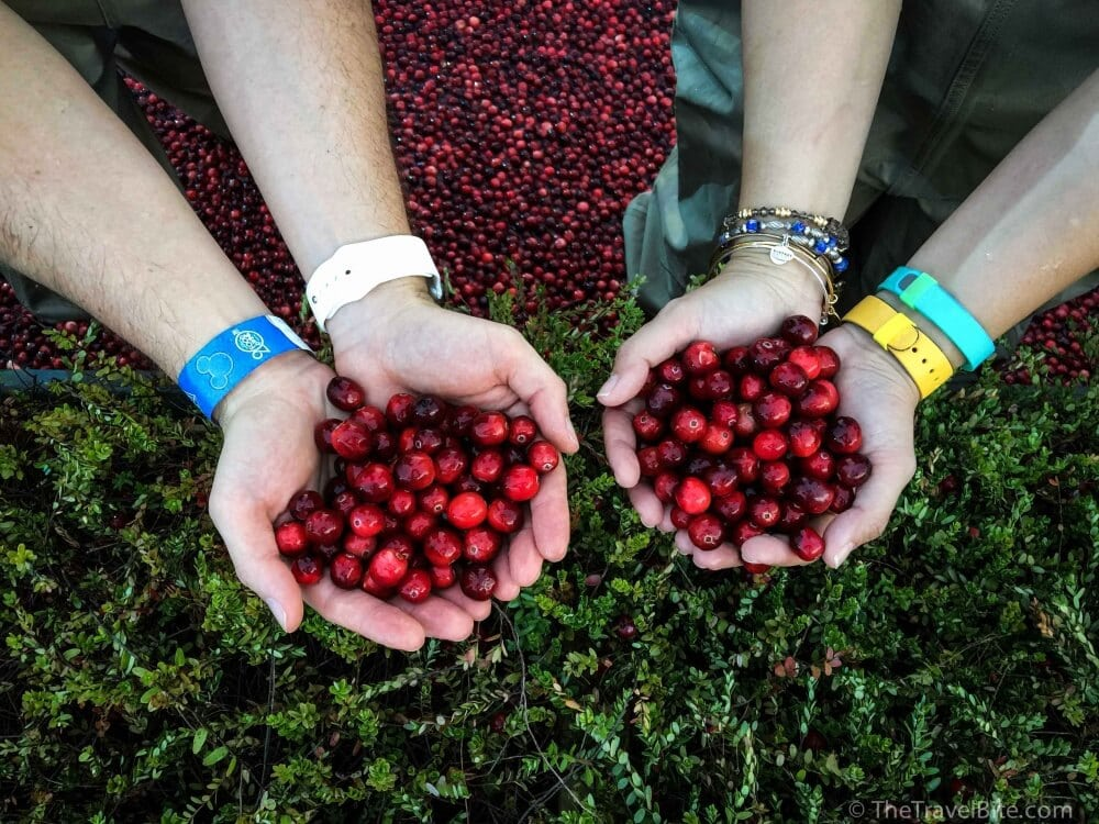 7 Things You Didn't Know About Cranberries-1