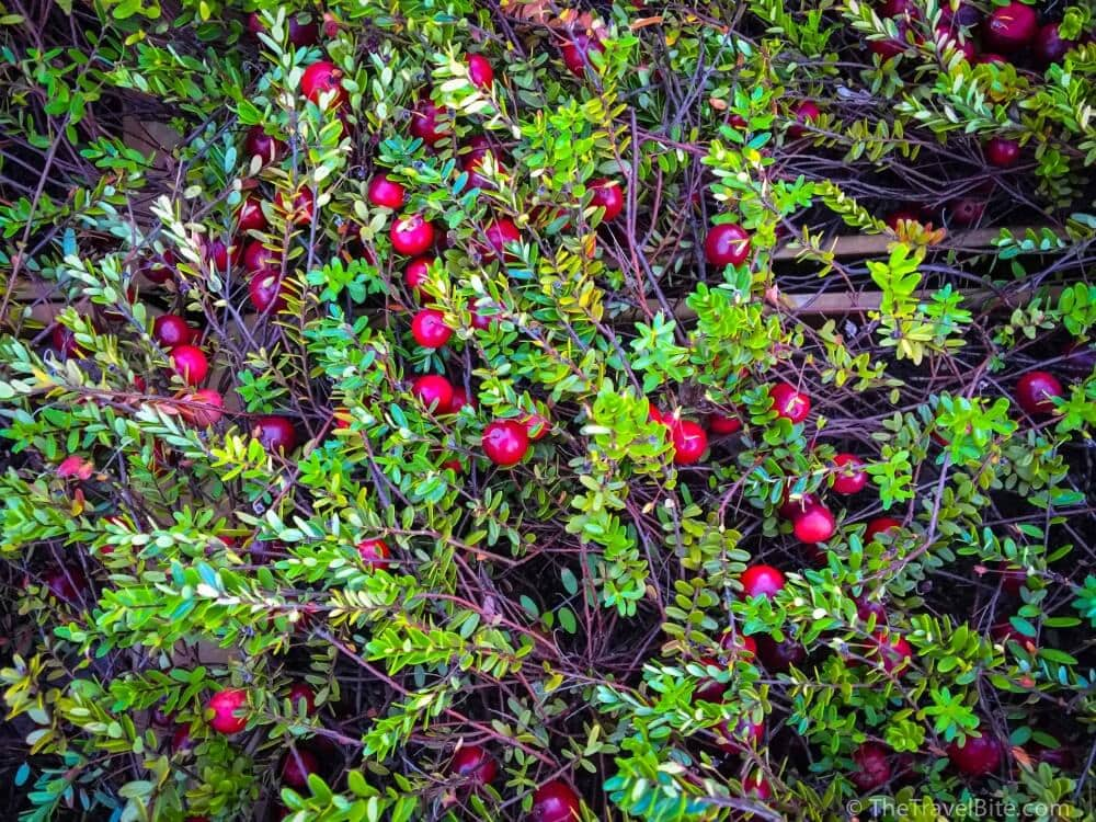 7 Fun Facts About Cranberries