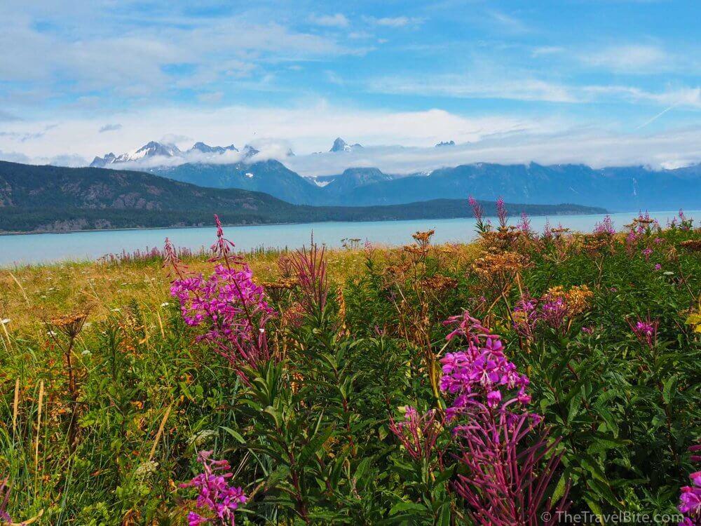 Skagway Alaska - Field of wildflowers overlooking a fiord.