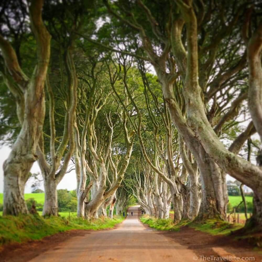 The Dark Hedges Game of Thrones - TheTravelBite.com