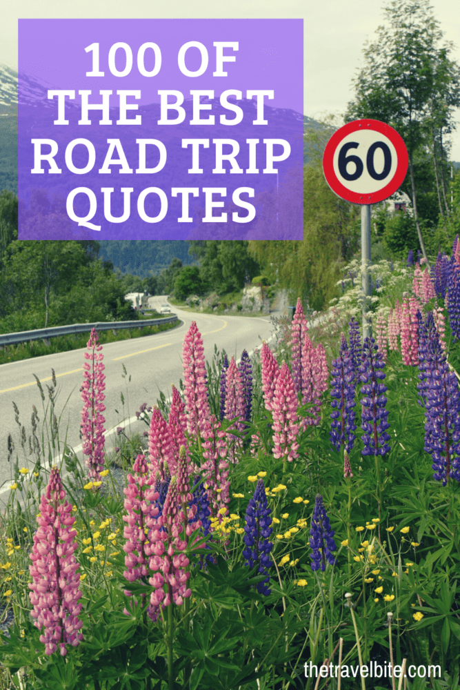 Road Trip Quotes Pin - Road going through pink and purple flowers - TheTravelBite.com